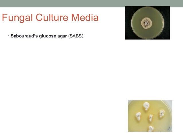 Fungal Culture Media • Sabouraud's glucose agar (SABS)