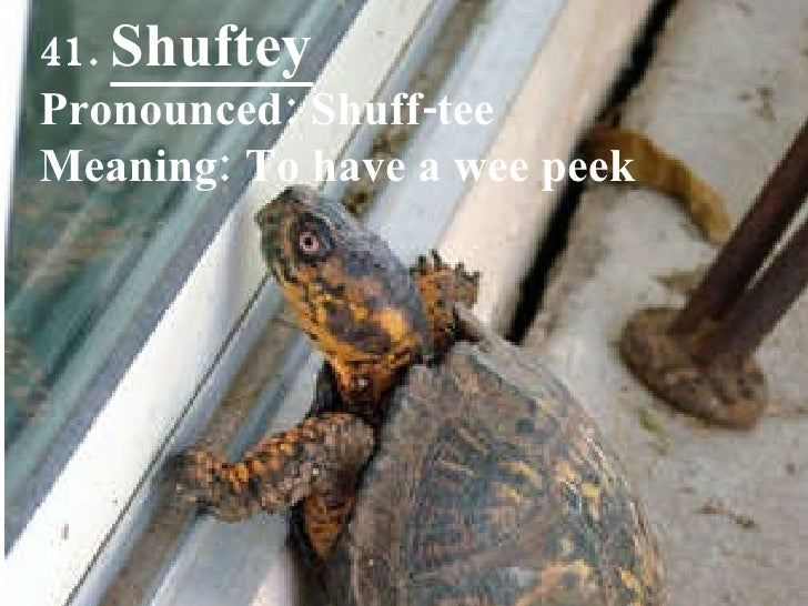41.  Shuftey Pronounced: Shuff-tee Meaning: To have a wee peek