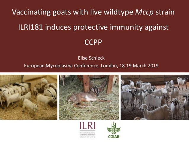 Vaccinating goats with live wildtype Mccp strain ILRI181 induces protective immunity against CCPP Elise Schieck European M...