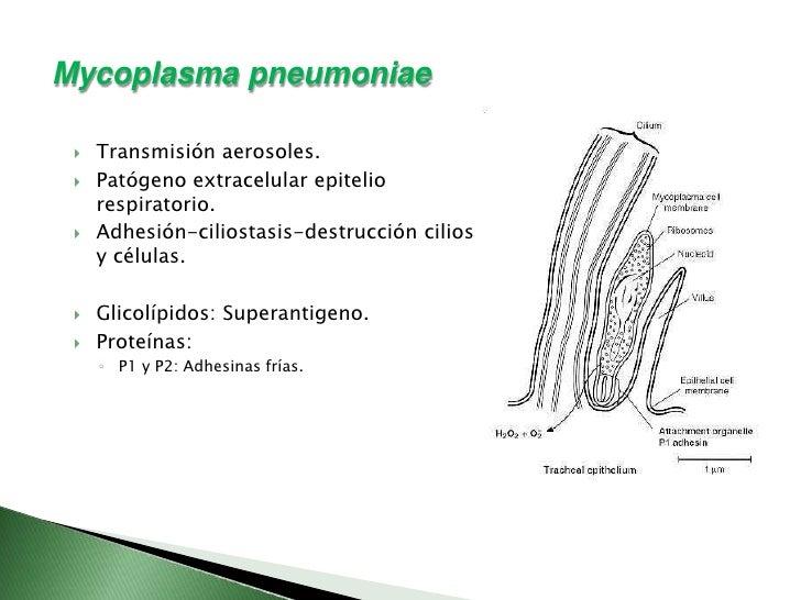 LCI-richtlijn Mycoplasma pneumoniae-infectie - RIVM