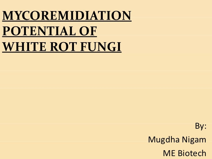 MYCOREMIDIATIONPOTENTIAL OFWHITE ROT FUNGI                            By:                  Mugdha Nigam                   ...