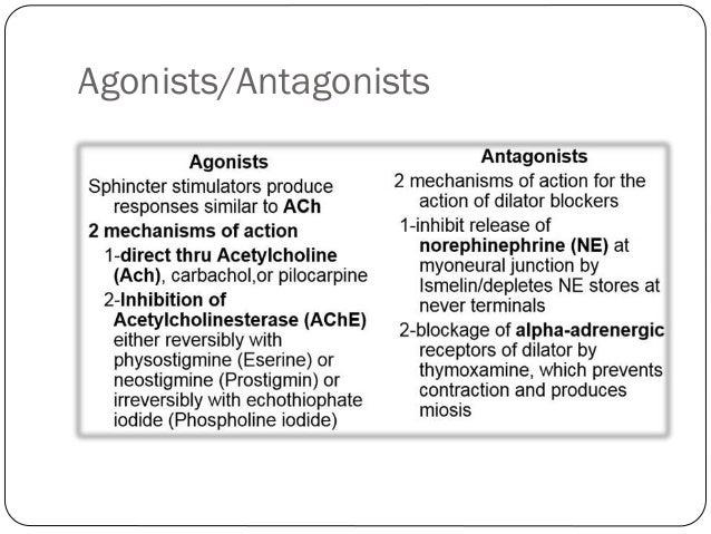 agonistsantagonists 4