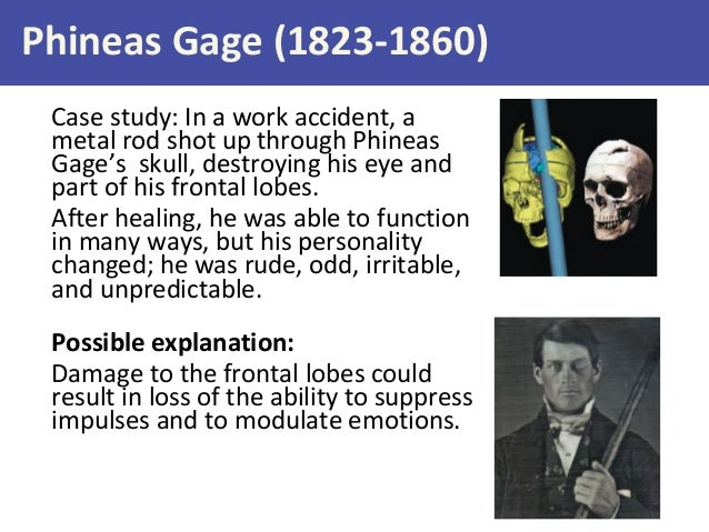 phineas gage and the role of Free essay: phineas gage and the role of the brain in cognitive functioning breanne warden psy/360 december 5, 2011 devlin crose phineas gage and the role of.