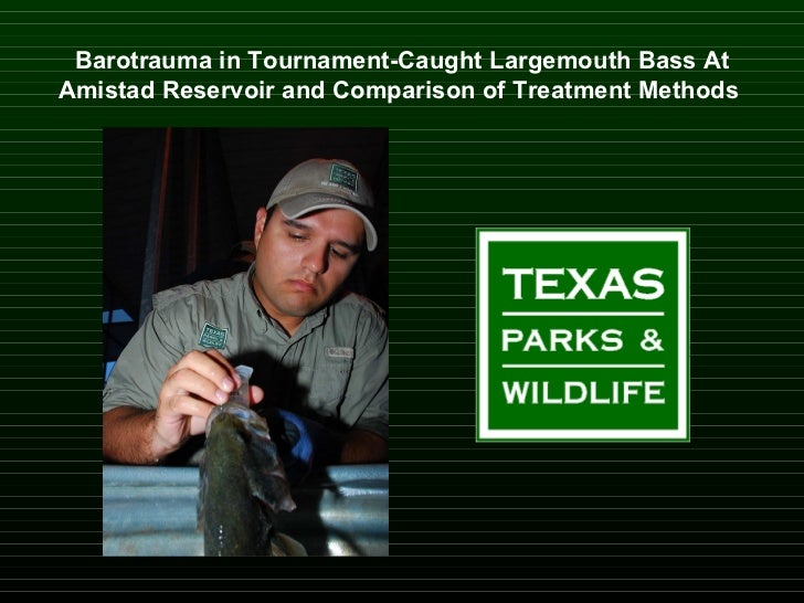 Barotrauma in Tournament-Caught Largemouth Bass At Amistad Reservoir and Comparison of Treatment Methods