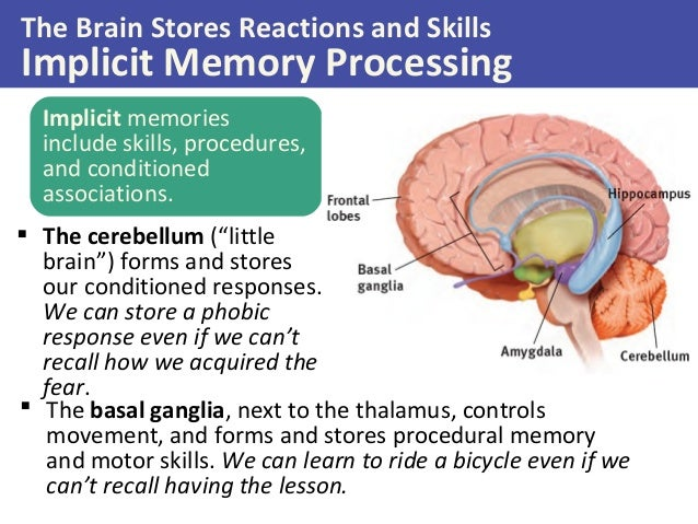 What Part Of The Brain Stores Memory >> Psychology Of Memory