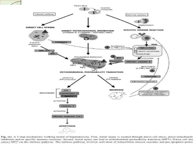 molecular mechanism of drug action pdf