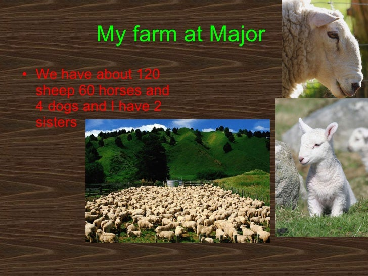 My farm at Major   <ul><li>We have about 120 sheep 60 horses and 4 dogs and I have 2 sisters  </li></ul>
