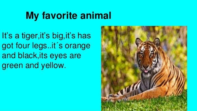 my-favorite-animal-3-638.jpg?cb=1406688492
