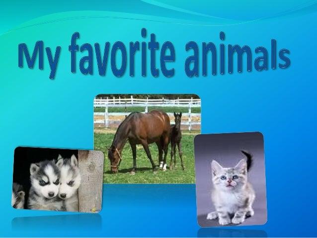 My favorite animals вероника шепелева