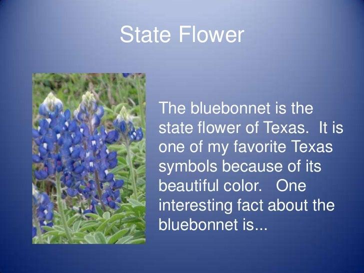 Miss Golman 39 S Favorite Texas State Symbols