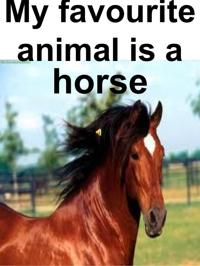 Can we guess your favorite animal?
