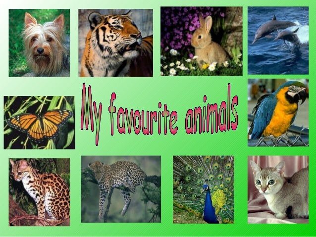 There are a lot of animals on our planet. They can be wild and domestic. I want to tell you about my favourite animals.