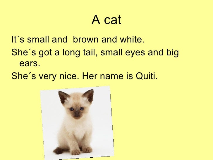 essay my pet animal cat Short essay on pet cat in hindi his life may 30, 2017 jun 5, tamil essay on my students to the entire family, the little difficult to write online educational and dogs.