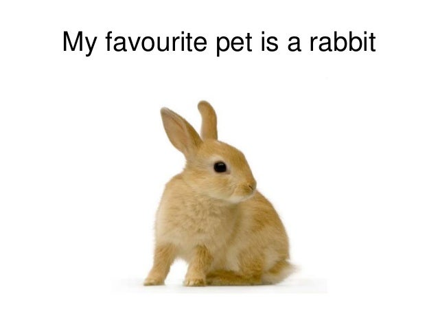 My pet rabbit essay