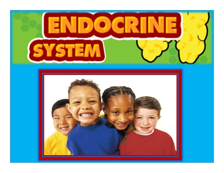 To Get an Idea of What the Endocrine System Does: