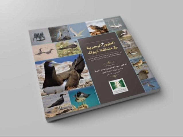 كتاب الطيور البحرية في منطقة تبوك , Seabirds of Tabuk region