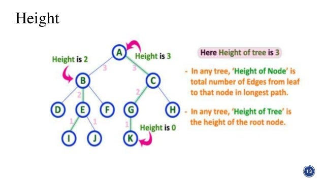 Tree in graph theory in discrete structure height 13 14 ccuart Images
