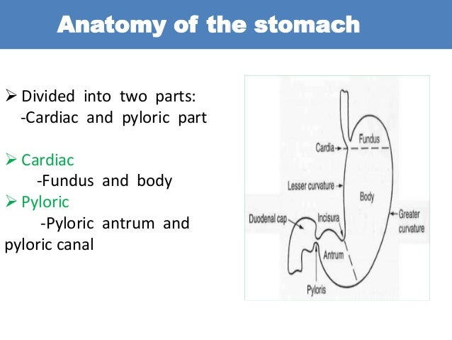 Learn barium meal follow through anatomy ccuart Choice Image