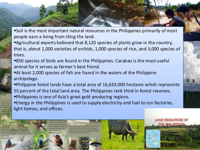 natural resources in the philippines Philippines has new repository of hydrocarbon and mining contracts, powered by resourcecontractsorg  natural resources can fuel conflicts, but also bring peace: a conversation with afrim's starjoan villanueva max brett 8 march 2018 the case for publishing petroleum contracts in nigeria.