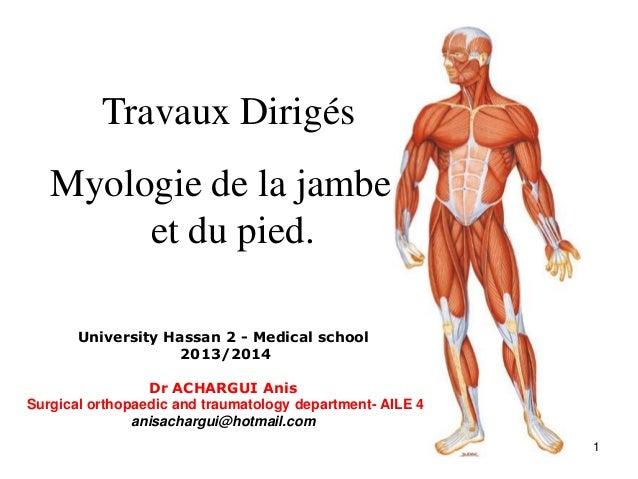 1 Travaux Dirigés Myologie de la jambe et du pied. University Hassan 2 - Medical school 2013/2014 Dr ACHARGUI Anis Surgica...