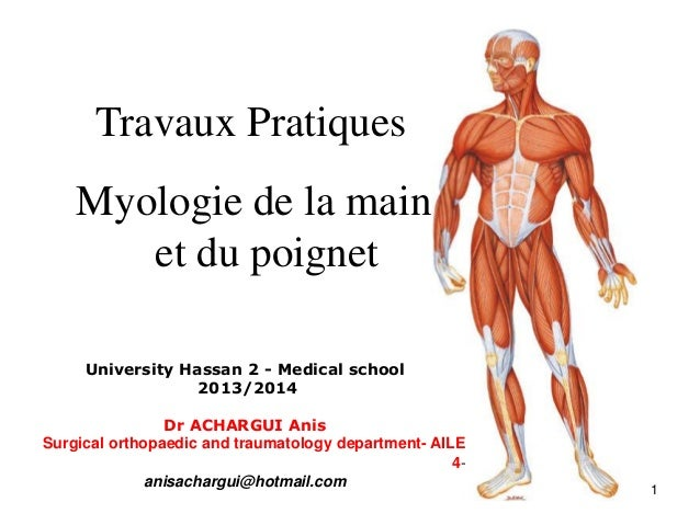 Travaux Pratiques Myologie de la main et du poignet University Hassan 2 - Medical school 2013/2014 Dr ACHARGUI Anis Surgic...