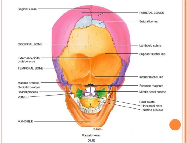 osteology of head and neck 17 638?cb=1415845506 osteology of head and neck