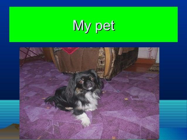 My petMy pet