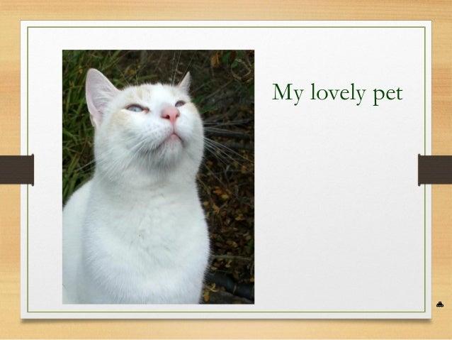 My lovely pet