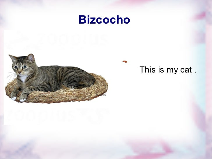 Bizcocho  This is my cat . Fontwork