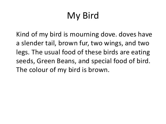 My Bird Kind of my bird is mourning dove. doves have a slender tail, brown fur, two wings, and two legs. The usual food of...