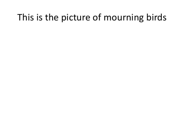 This is the picture of mourning birds