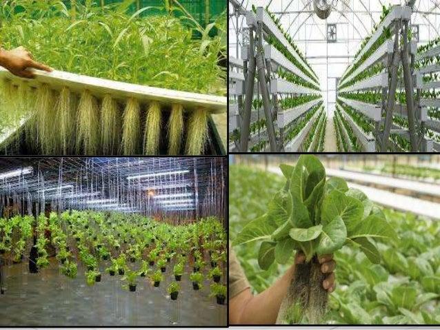 Soilless agriculture for Soil less farming