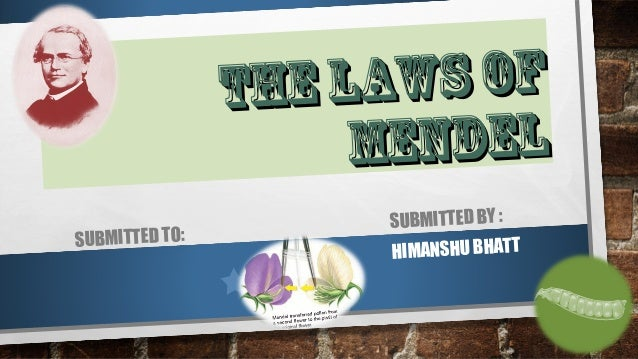 THE LAWS OF  MENDEL  SUBMITTED TO: SUBMITTED BY :  HIMANSHU BHATT