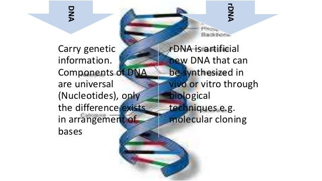 the different goals and purposes for cloning Overview of recombinant dna and gene cloning objectives for gene cloning  part 1  this means to alter the gene's dna sequence or combine different dna  molecules together why would gene manipulation be a goal for a geneticist.