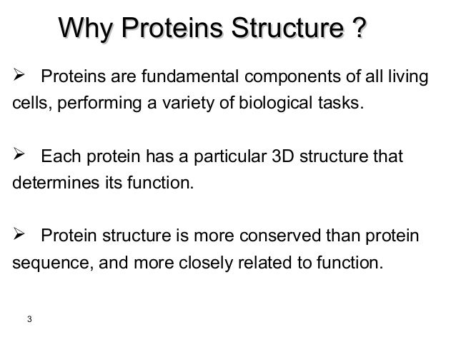 What are protein kinases and what is their function in human body?