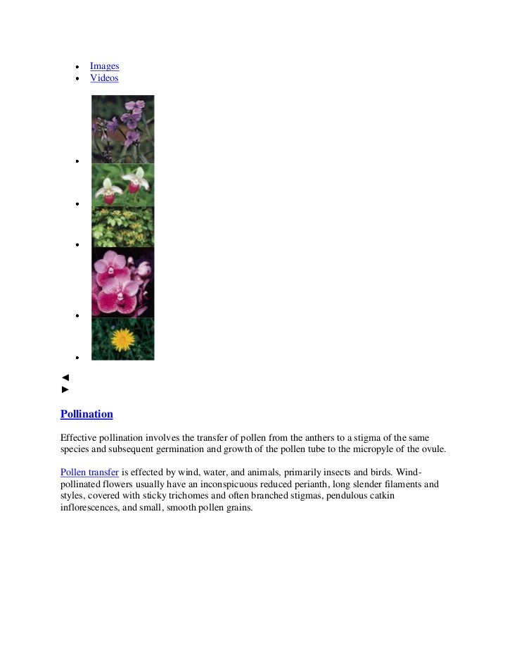 Images       Videos◄►PollinationEffective pollination involves the transfer of pollen from the anthers to a stigma of the ...