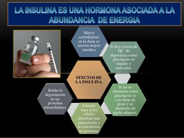 Fisiología Gyton Capitulo 78: Insulina, Glucógeno y