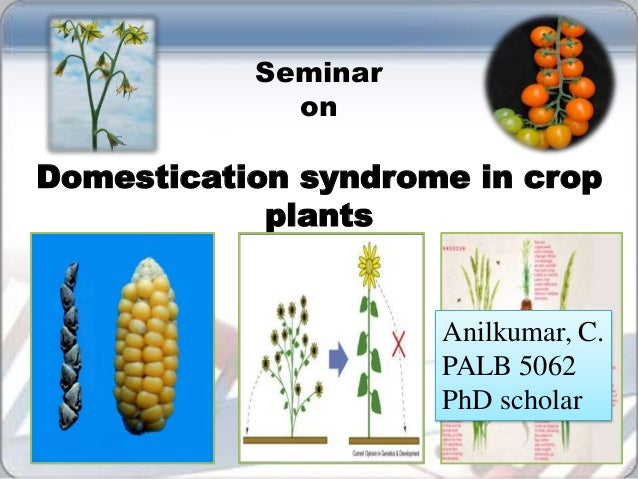 Domestication syndrome in crop plants