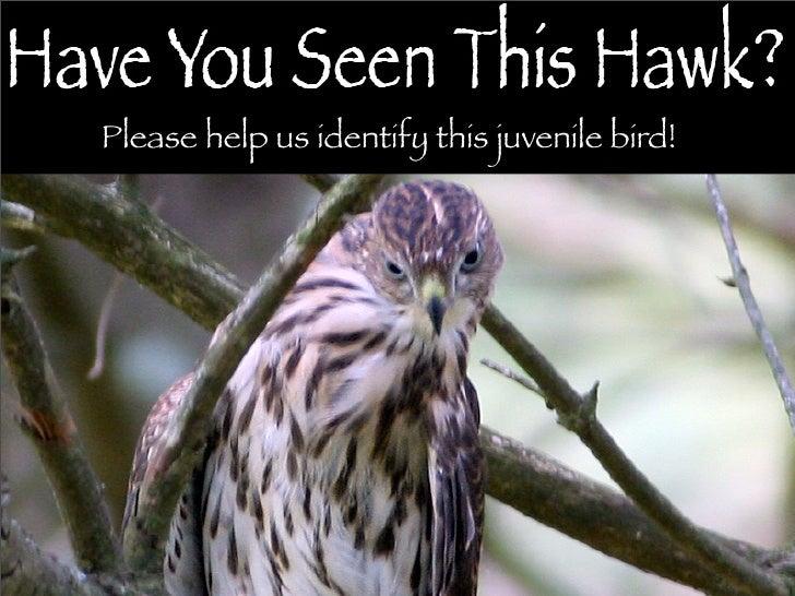 Please help us identify this juvenile bird!