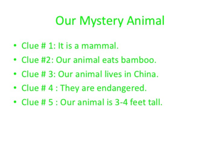 Our Mystery Animal•   Clue # 1: It is a mammal.•   Clue #2: Our animal eats bamboo.•   Clue # 3: Our animal lives in China...