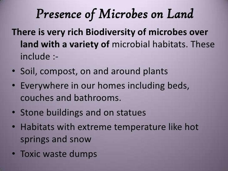 Mystery microbe