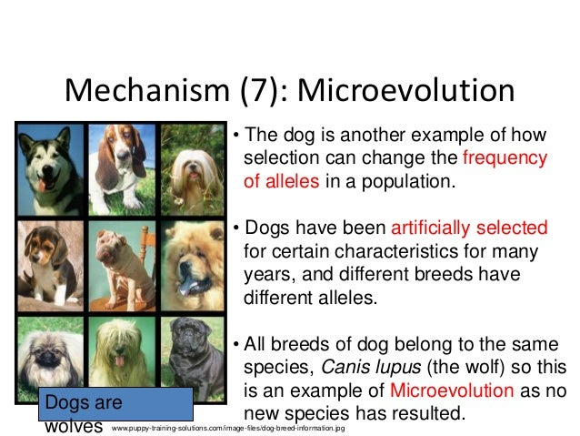 Evolution And Biodiversitygeneticsdigestive Systemecosystem