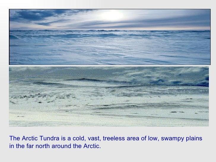 Arctic tundra essay