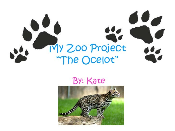 """My Zoo Project""""The Ocelot"""" <br />By: Kate<br />"""