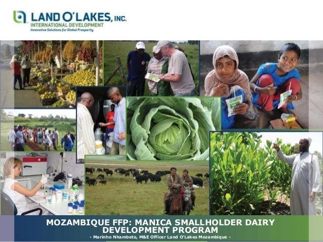 MOZAMBIQUE FFP: MANICA SMALLHOLDER DAIRY DEVELOPMENT PROGRAM - Marinho Nhambeto, M&E Officer Land O'Lakes Mozambique -