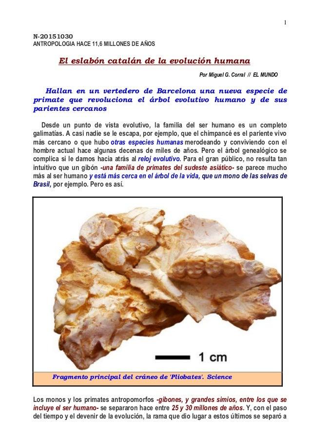 N 20151030 el eslabón catalán de la evolución humana x