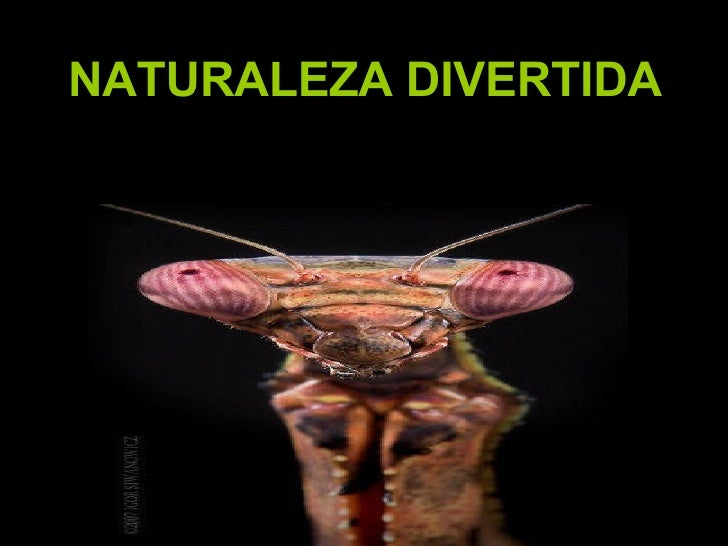 NATURALEZA DIVERTIDA