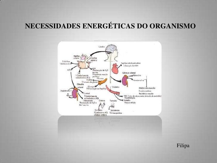 NECESSIDADES ENERGÉTICAS DO ORGANISMO <br />Filipa<br />