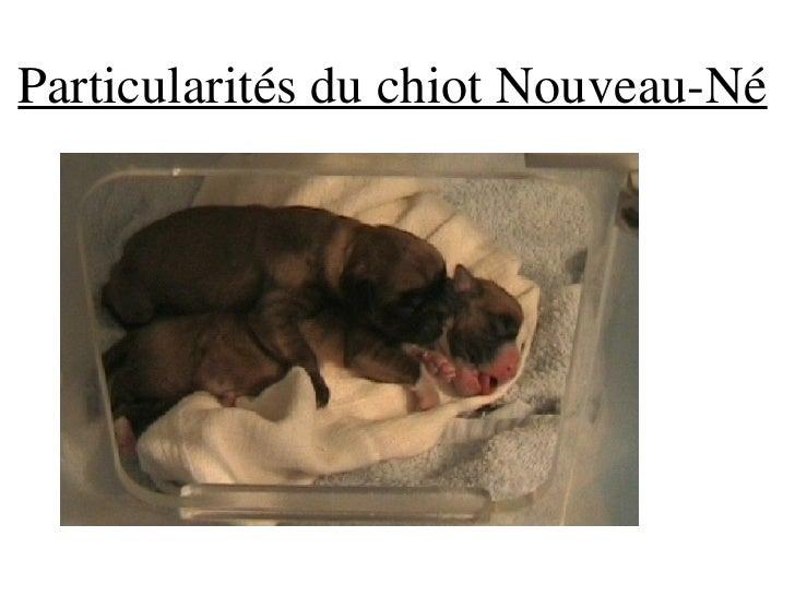 Particularités du chiot Nouveau-Né