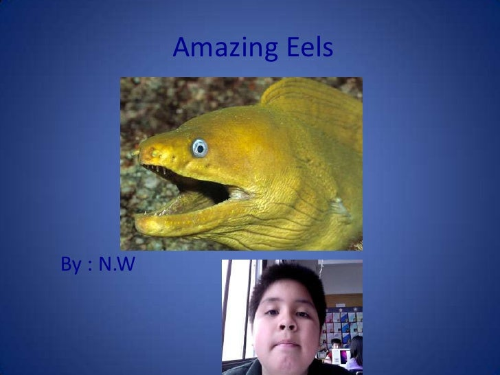 Amazing Eels<br />      By : N.W<br />
